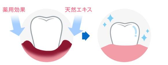 口臭・歯周病予防効果【シメン-5-オール・アラントイン・ノバラエキス・クマザサエキス・ワレモコウエキス】