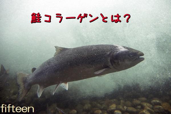 鮭コラーゲンとは?
