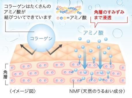 JINOはそのNMFの主成分・アミノ酸に注目!
