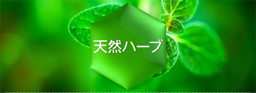 軽井沢産の天然ハーブ