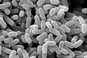 アシストデオ乳酸菌